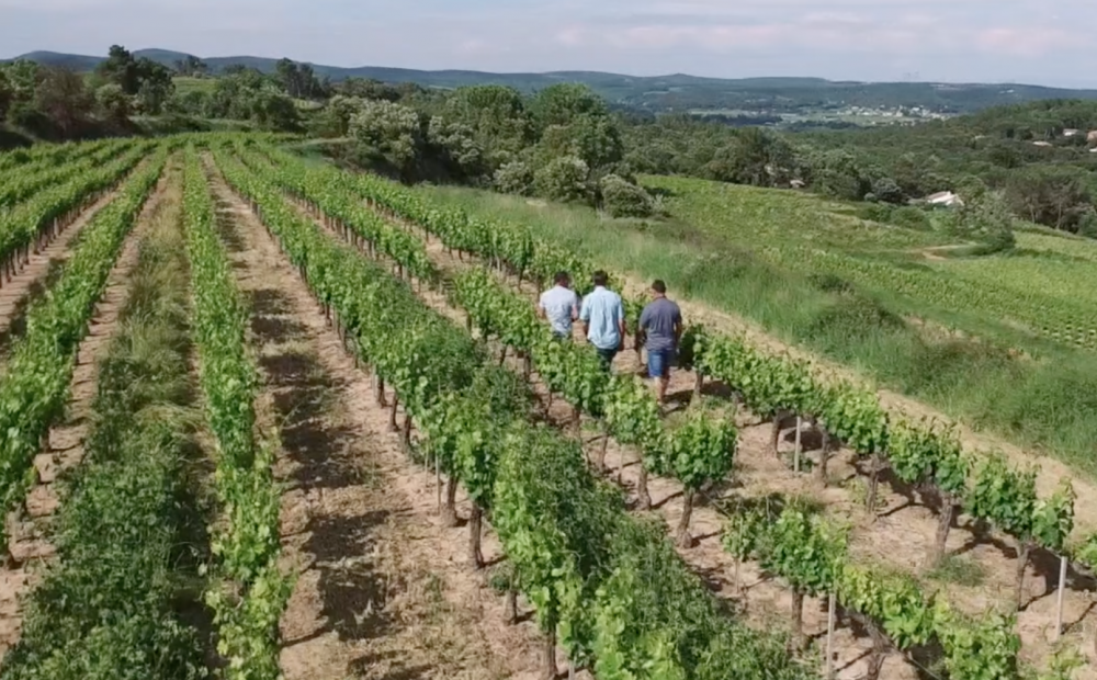 vignobles & compagnie-vignes-partenaires