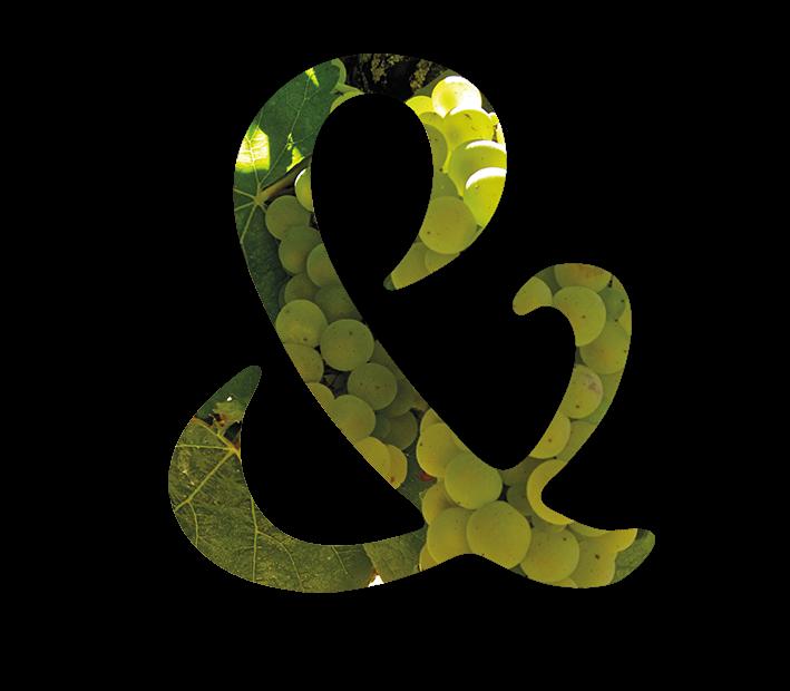 Vignobles & Compagnie_vin_rhone_vendanges2017_blancs