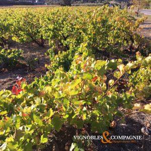 vignobles__compagnie_automne-2017_rhone-2
