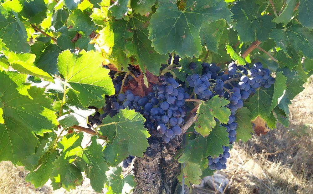 Vendanges Vignobles & Compagnie