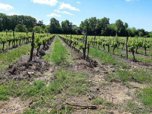 Vignobles et Compagnie Epamprage